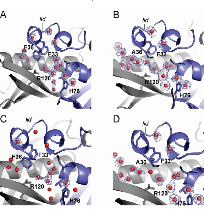 Figure 5 from Structural and biochemical studies of a