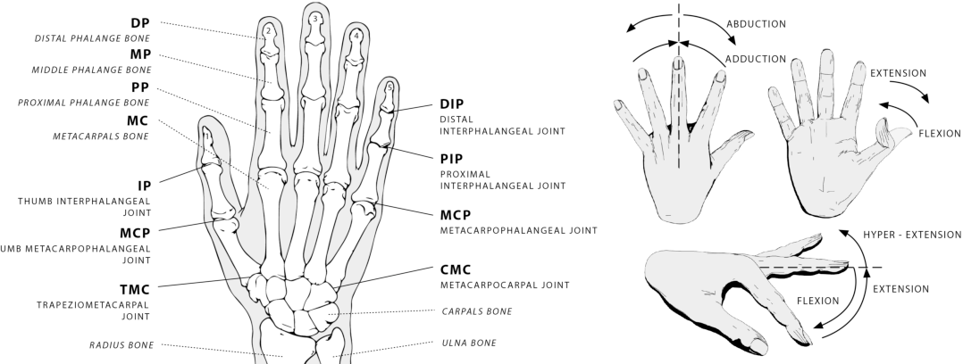 Hand Mc Joints Diagram - Product Wiring Diagrams •