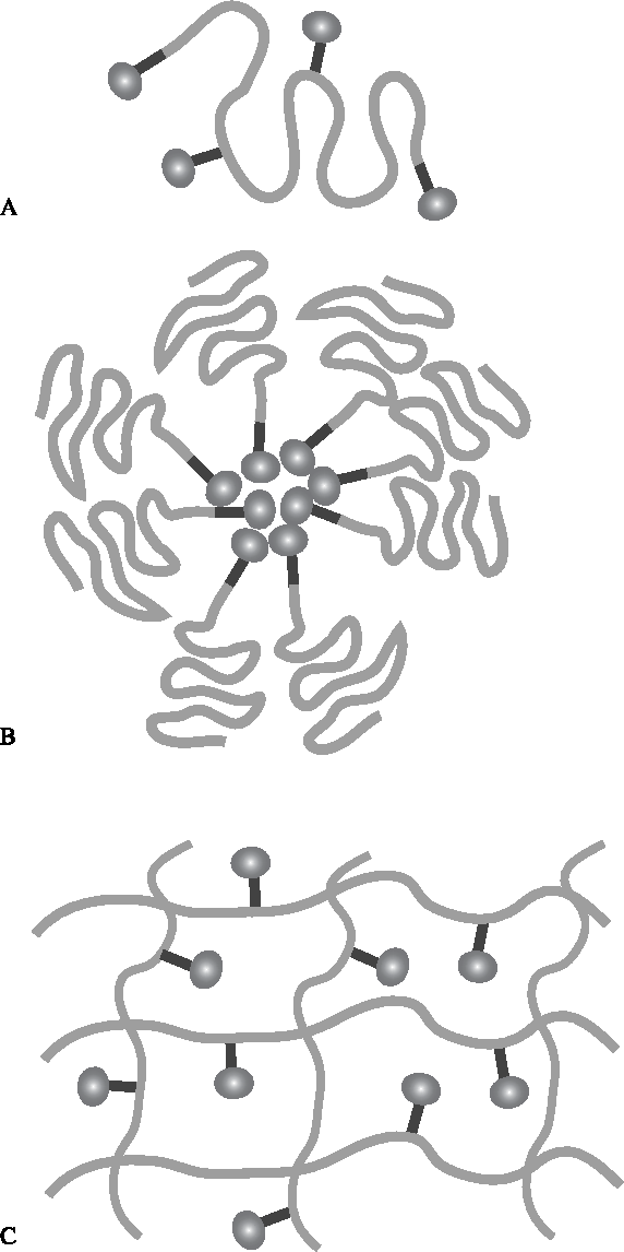 Figure 2. Schematic depiction of MMP-activation of carrier– peptide prodrugs. Three general subtypes of this category exist. In the first (A), a macromolecule is modified to bear one or more peptide-prodrugs on the macromolecule chain. The peptideprodrug may be randomly placed on the chain, specifically placed on the chain (as in a protein), or at the end(s) of the macromolecular carrier. In the second, (B), macromolecular carriers may assemble into higher order structures such as micelles. In the final carrier– peptide conjugate (C), the drug is held within a three-dimensional hydrogel network. In each, the macromolecular carrier (green), MMP-sensitive peptide (blue), and therapeutic agent (magenta) are presented. The activation mechanism is similar to the prodrug (Figure 1) except the therapeutic agent (typically with an inactive portion of the MMP-sensitive peptide) is released from the inactive macromolecule.