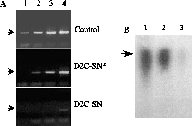Capsid-targeted viral inactivation can destroy dengue 2