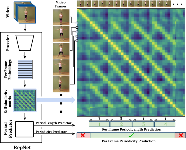 Figure 1 for Counting Out Time: Class Agnostic Video Repetition Counting in the Wild