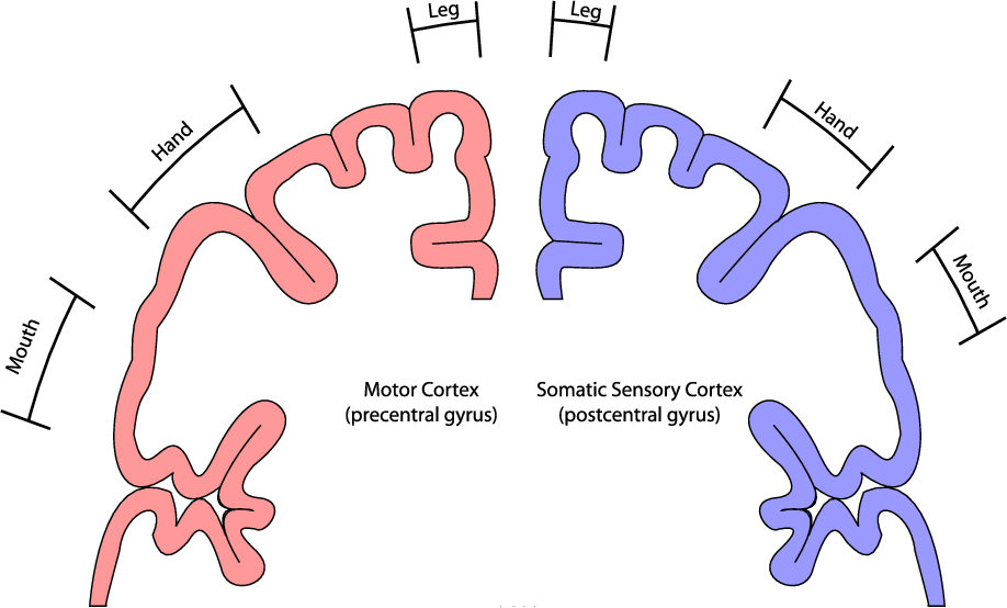 Figure 22 From Chapter 2 Brain Sensors And Signals 2 1 Relevant