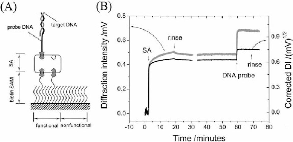 Figure 2. (A) Schematic diagram of the multilayer architecture built on the functional pattern surface. (B) Experimental (gray curve) and corrected (black) kinetic curves for SA and DNA probe binding (both from a 1 mM solution).