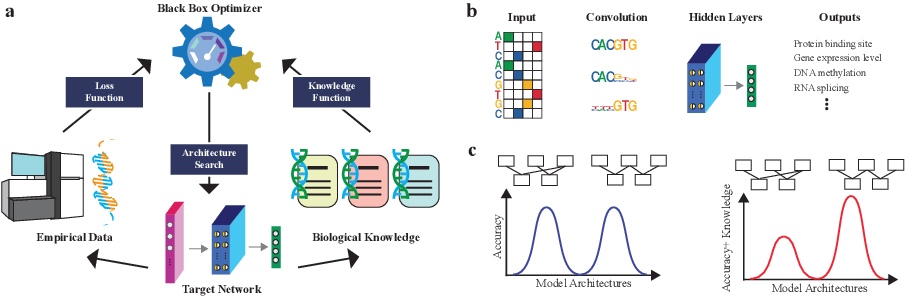 Figure 1 for Neural Architecture Search for Joint Optimization of Predictive Power and Biological Knowledge