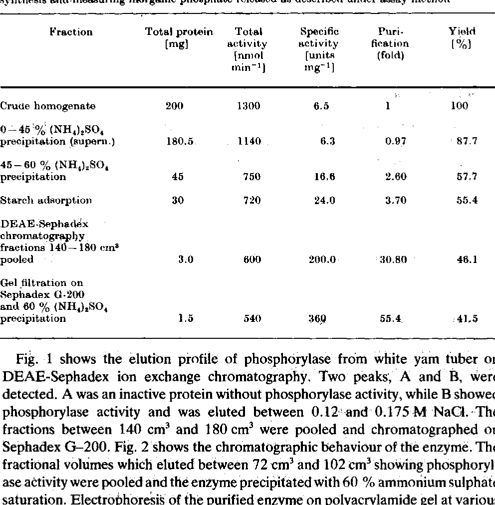 TABLE 1 Summary of purification procedures. -- Phosphorylase activity was assayed in direction of starch s~,nthesis a~d.measuring inorganic ph0sphaCe released as described under assay method