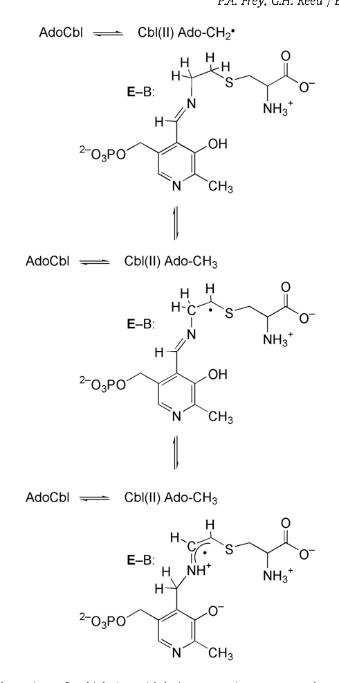 8 Radical Reactions Of 4 Thialysine With Lysine 56