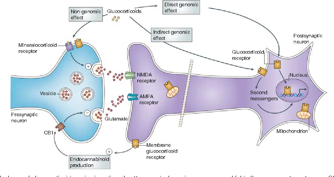 Figure 5 from Stress Effects on Neuronal Structure ...