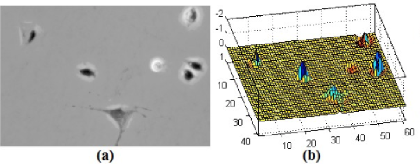 Figure 3 for Phase Contrast Microscopy Cell PopulationSegmentation: A Survey