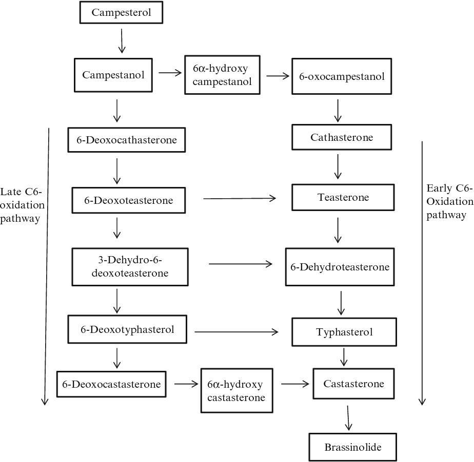 Plant Hormone Signaling Systems in Plant Innate Immunity - Semantic Scholar