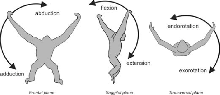 Functional anatomy of the gibbon forelimb: adaptations to a ...