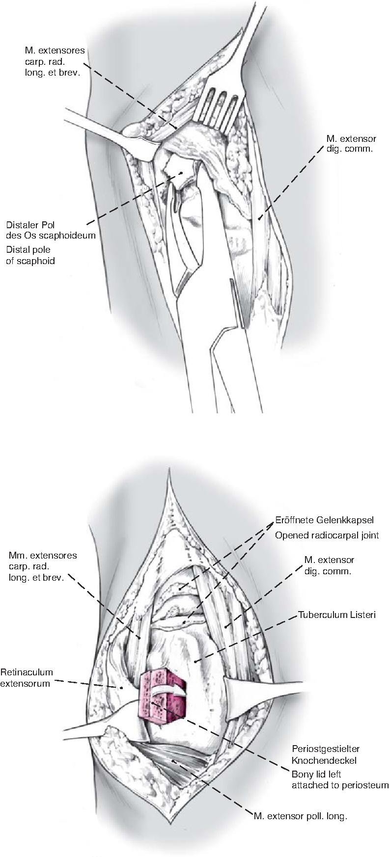 Nett Anatomie Referenzmodell Ideen - Anatomie Ideen - finotti.info