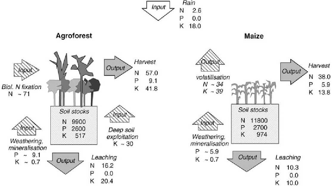 Figure 2. Nutrient balance of agroforestry and maize, location 1. Solid arrows indicate measured fluxes, hatched arrows indicate nutrient fluxes that were not measured, but estimated based on indirect evidence (see text). Soil stocks (0–40 cm, total N and P, exchangeable K) are in kg ha 1, all fluxes in kg ha 1 a 1.