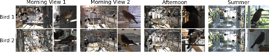 Figure 3 for 3D Bird Reconstruction: a Dataset, Model, and Shape Recovery from a Single View