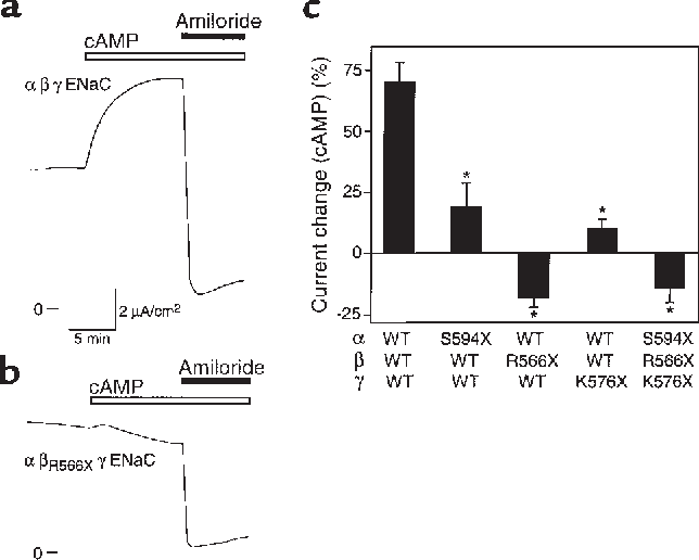 Figure 7 COOH Terminal Truncations Disrupt Stimulation By CAMP A And B