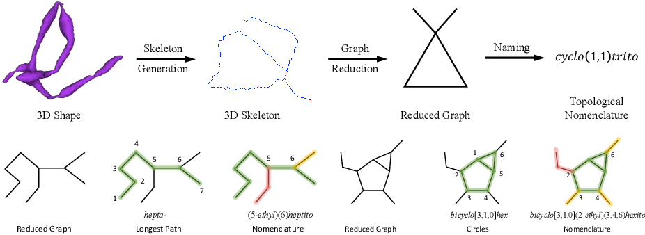 Figure 3 for A Topological Nomenclature for 3D Shape Analysis in Connectomics