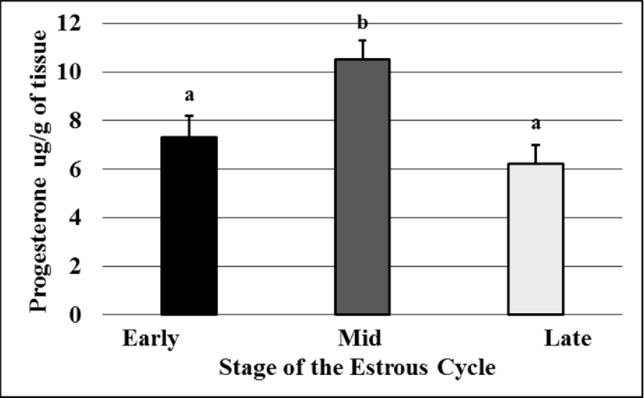 Figure 2.4. The concentration (μg/g of tissue) of progesterone in CL at early-, mid-, or late-luteal phases of the estrous cycle. a,b P<0.05, means ±SEM with different superscripts differ.