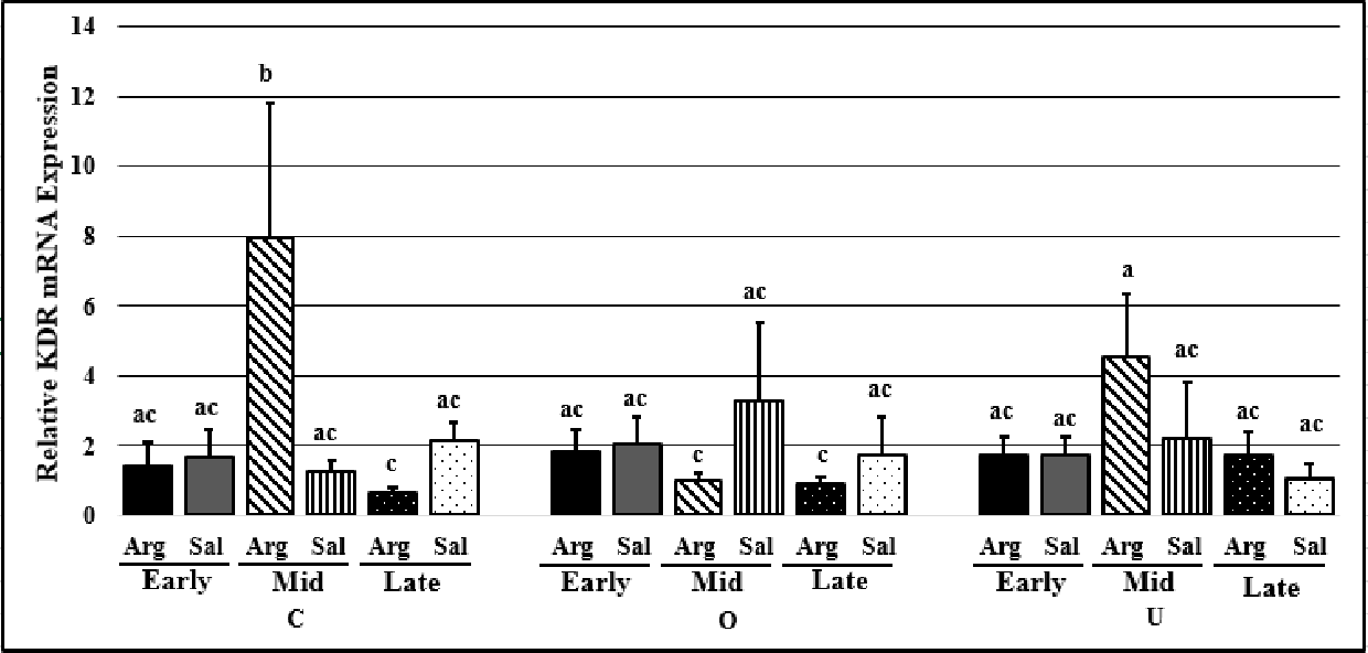 Figure 2.10. KDR mRNA expression in CL at early-, mid-, and late-luteal phases of the estrous cycle in ewes treated with arginine (Arg) or saline (Sal) on control (C), overfed (O) or underfed (U) nutritional planes. a, b, c P<0.05, means ± SEM with different superscripts differ.
