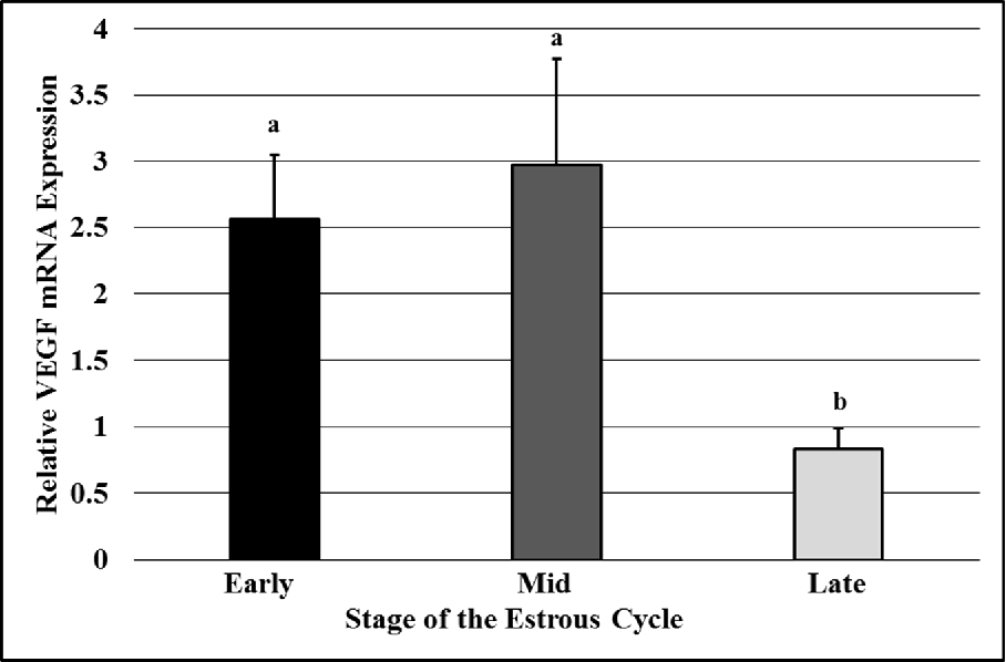Figure 2.9. Vascular endothelial growth factor (VEGF) mRNA expression in CL at early-, mid-, or late-luteal phases of the estrous cycle. a,b P<0.05, means ± SEM with different superscripts differ.