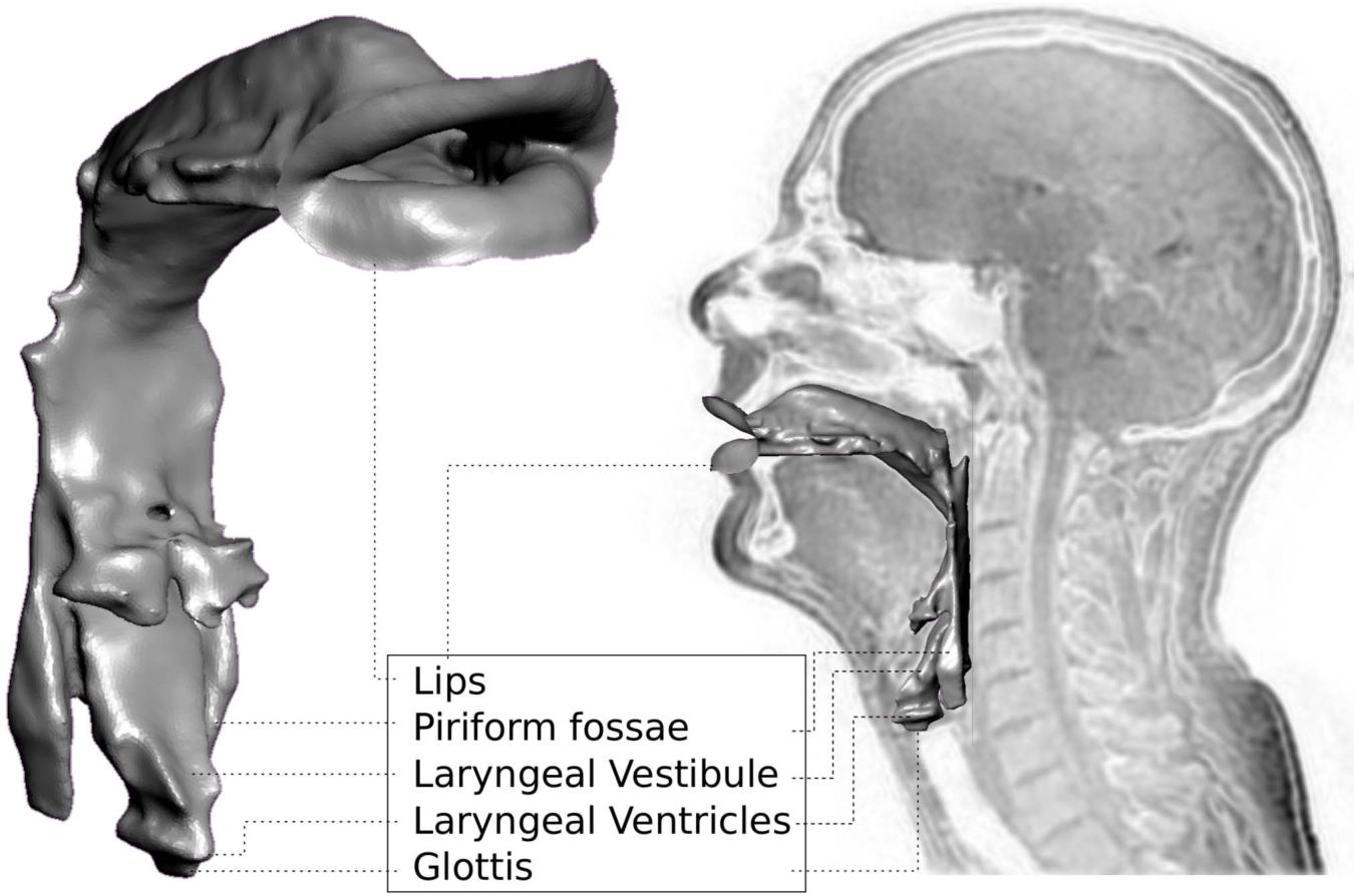 Nett Pyriform Fossa Anatomie Fotos - Anatomie Ideen - finotti.info
