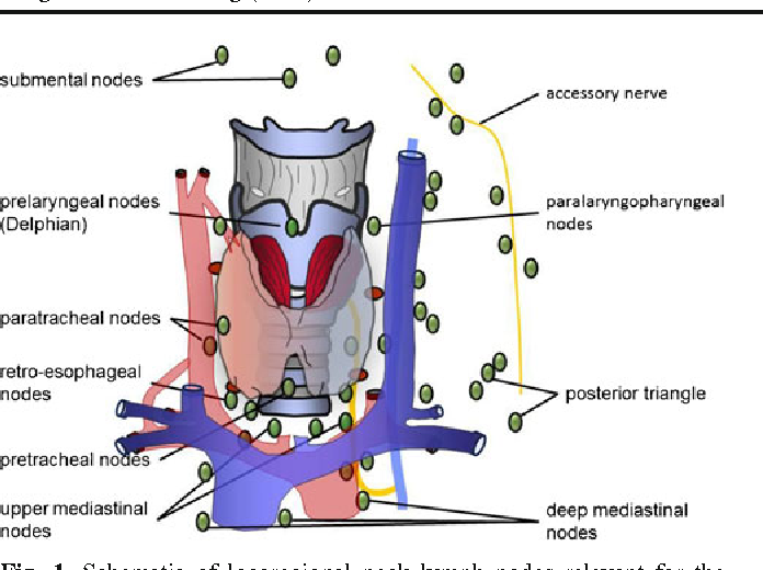Classification Of Locoregional Lymph Nodes In Medullary And