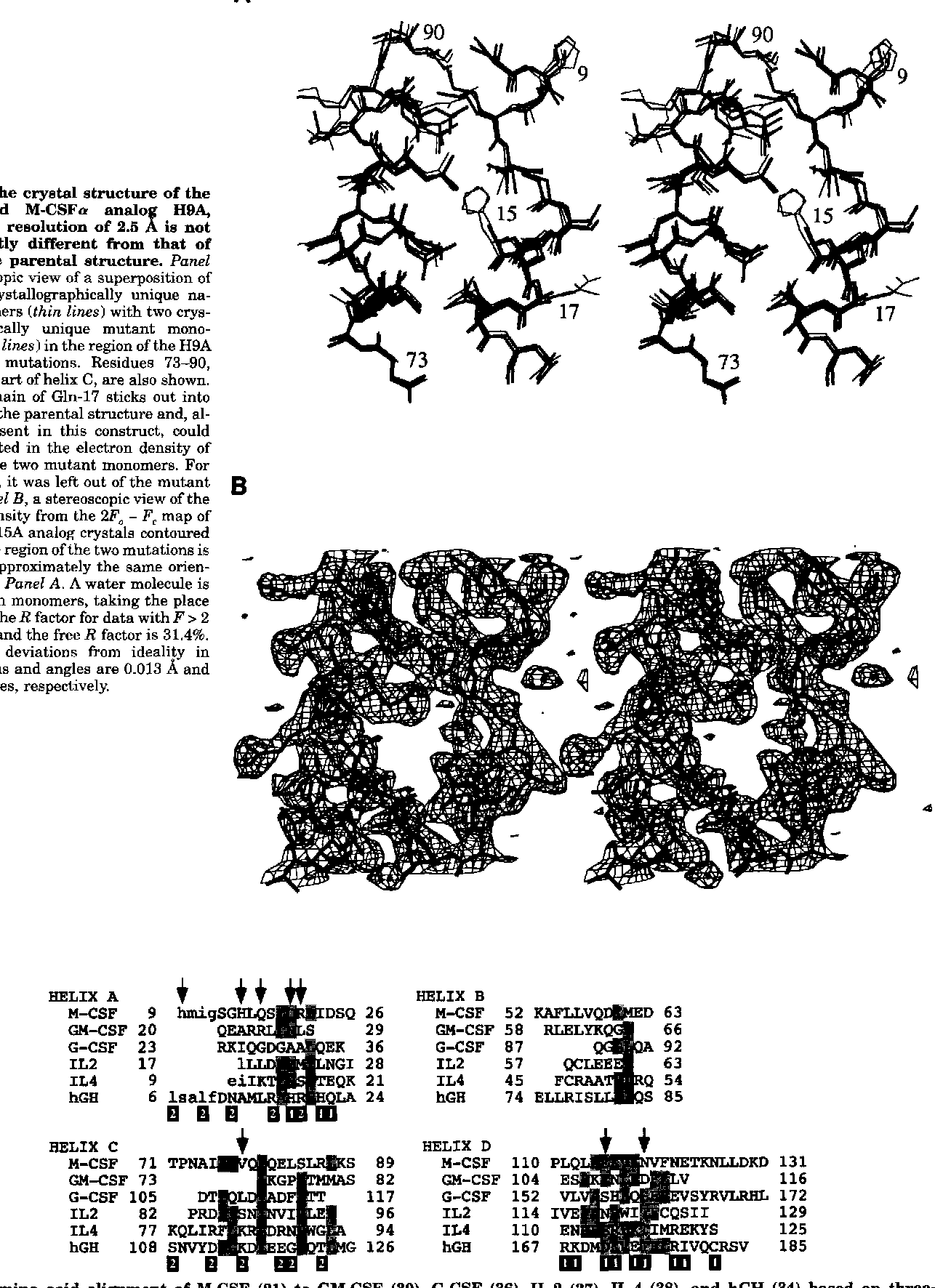 FIG. 3. The crystal structure of the inactivated M-CSFo analo H9A, H16A at a resolution of 2.6 .f is not significantly different from that of the native parental structure. Panel A, stereoscopic view of a superposition of the two crystallographically unique native monomers (thin lines) with two crystallographically unique mutant monomers (thick lines) in the region of the H9A and H15A mutations. Residues 73-90, which are part of helix C, are also shown. The side chain of Gln-17 sticks out into solution in the parental structure and, although present in this construct, could not be located in the electron density of either of the two mutant monomers. For this reason, it was left out of the mutant B model. Panel B, a stereoscopic view of the