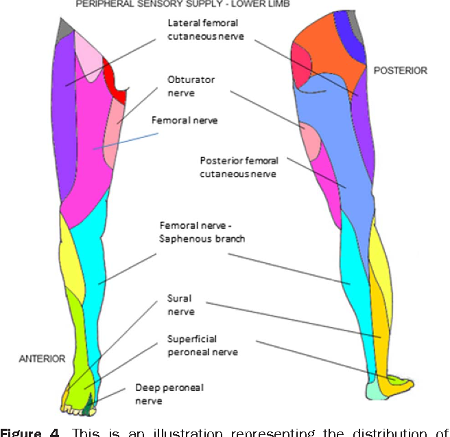 Figure 4 From Postpartum Spinal Cord Root Plexus And Peripheral