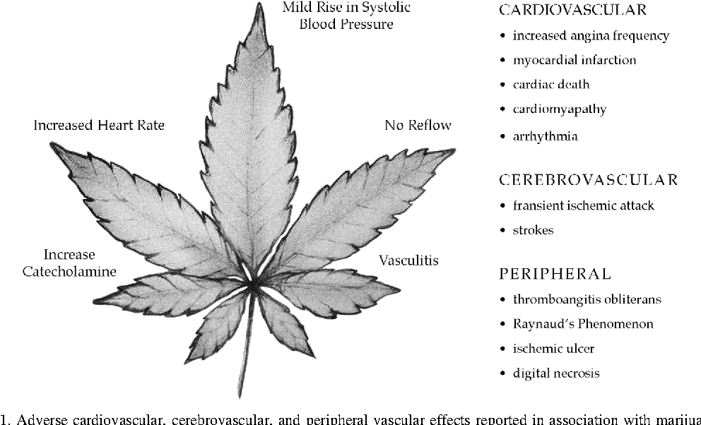 Figure 1. Adverse cardiovascular, cerebrovascular, and peripheral vascular effects reported in association with marijuana use.