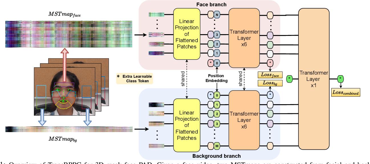 Figure 1 for TransRPPG: Remote Photoplethysmography Transformer for 3D Mask Face Presentation Attack Detection