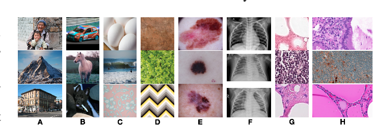 Figure 1 for Cats, not CAT scans: a study of dataset similarity in transfer learning for 2D medical image classification