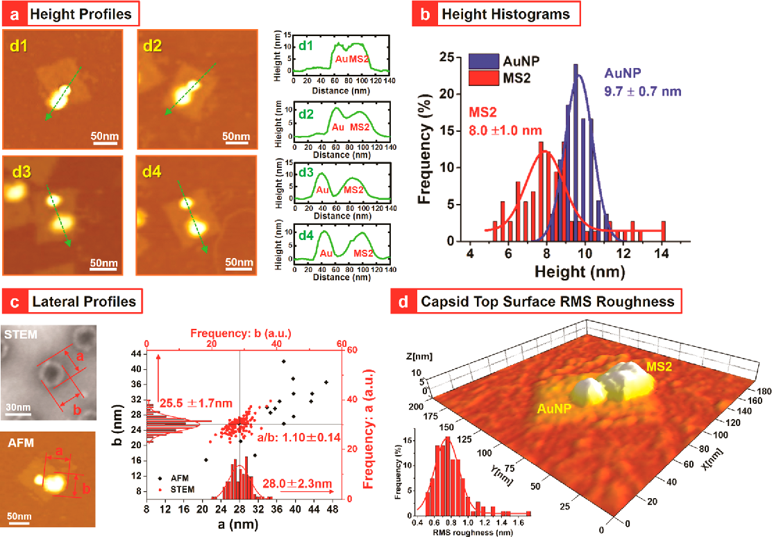Hierarchical assembly of plasmonic nanostructures using virus capsid ...