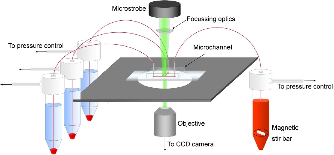 Figure 1. Schematic of the experimental setup. The blood sample is stirred continuously and perfused via pressure control. Focussed microstrobe illumination is used to acquire images of the flow with a CCD camera. doi:10.1371/journal.pone.0100473.g001