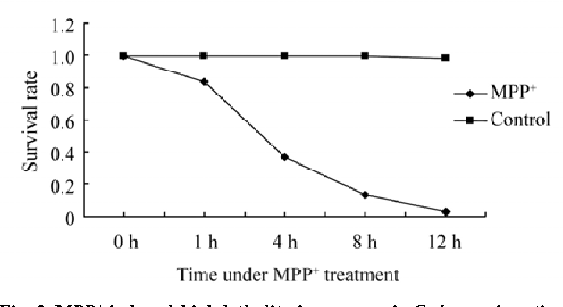 Depleted Atp Levels Causes Neural >> Figure 2 From Atp Depletion Is The Major Cause Of Mpp Induced