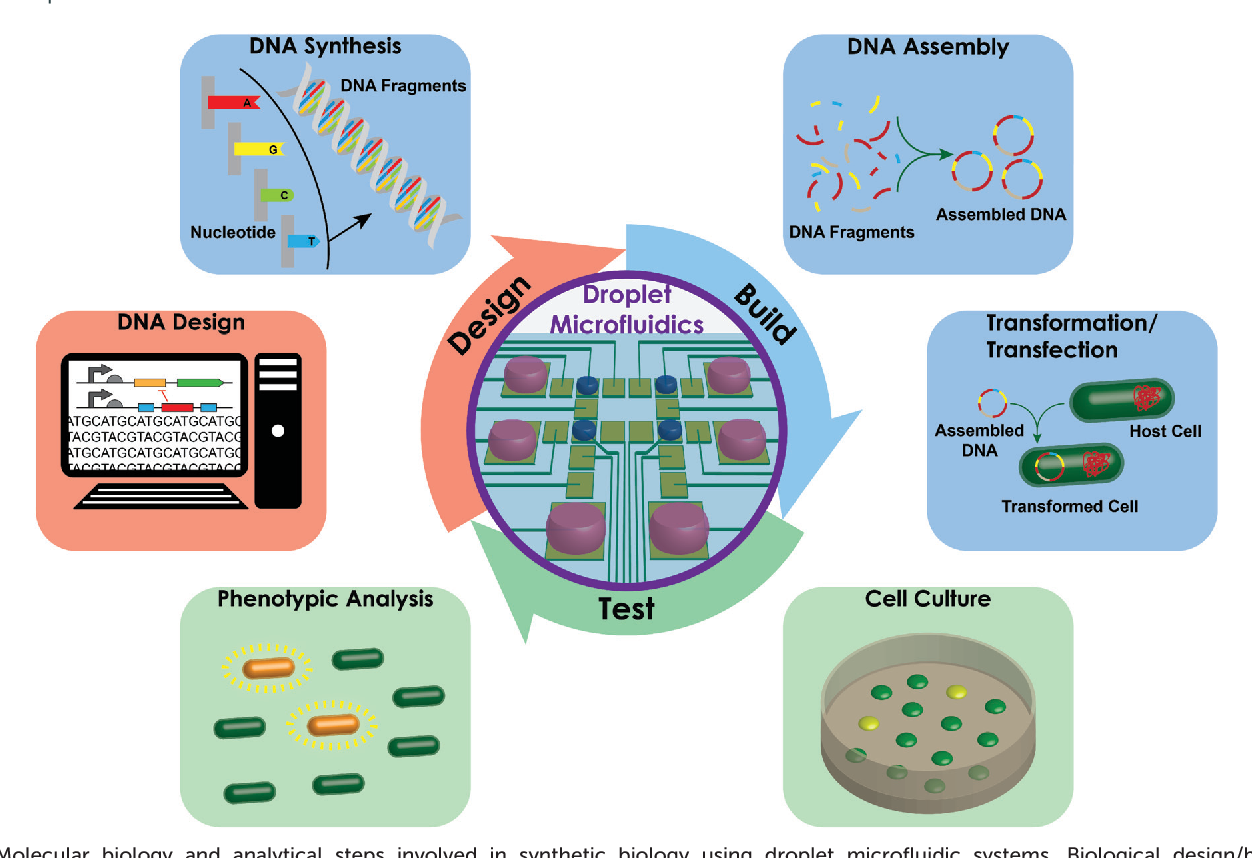 Figure 1 from Droplet microfluidics for synthetic biology
