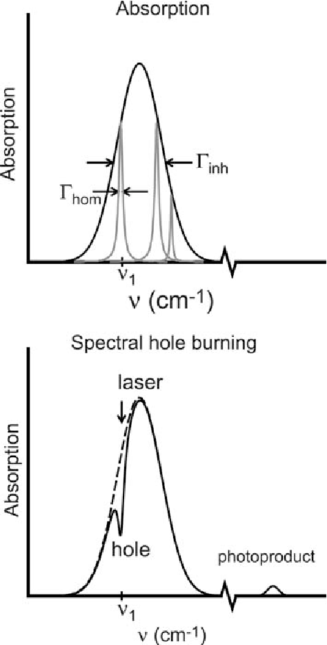 Spectral Hole Burning Examples From Photosynthesis
