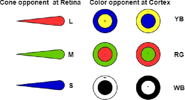 Figure 1 for An HVS-Oriented Saliency Map Prediction Modeling