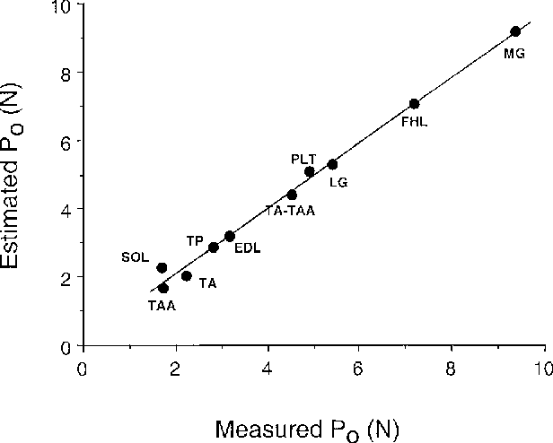 FIGURE 2. Comparison between measured Po and estimated Po, based on measurement of PCSA in guinea pig muscles. Note that PCSA and Po are proportional for all muscles except the soleus, the one muscle with a preponderance of slow muscle fibers. (Abbreviations: EDL, extensor digitorum longus; FHL, flexor hallucis longus; LG, lateral gastrocnemius; MG, medial gastrocnemius; PLT, plantaris; SOL, soleus; TA, tibial anterior; TA–TAA, combined tibialis anterior accessorius and tibialis anterior; TAA, tibialis anterior accessorius; TP, tibialis posterior.) Note the close linear correlation between PCSA and measured Po. The slope of the line 22.5N/cm2 represents a reasonable value for muscle-specific tension. (Data replotted from Powell et al.50)