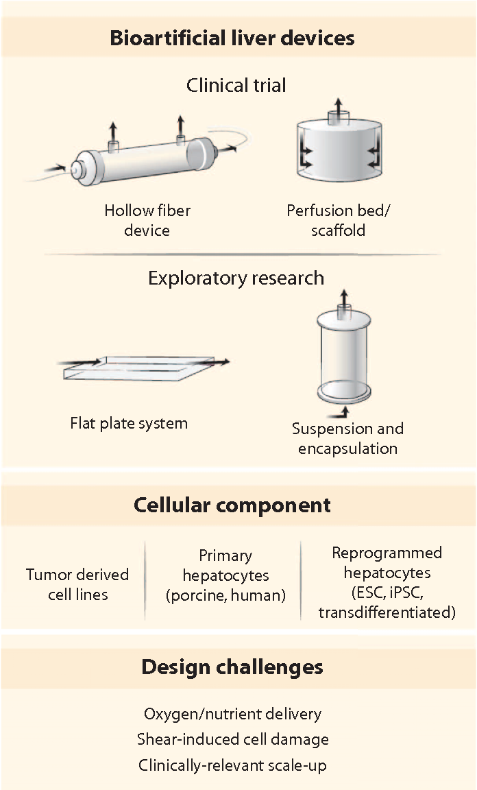 Figure 4 From Cell And Tissue Engineering For Liver Disease