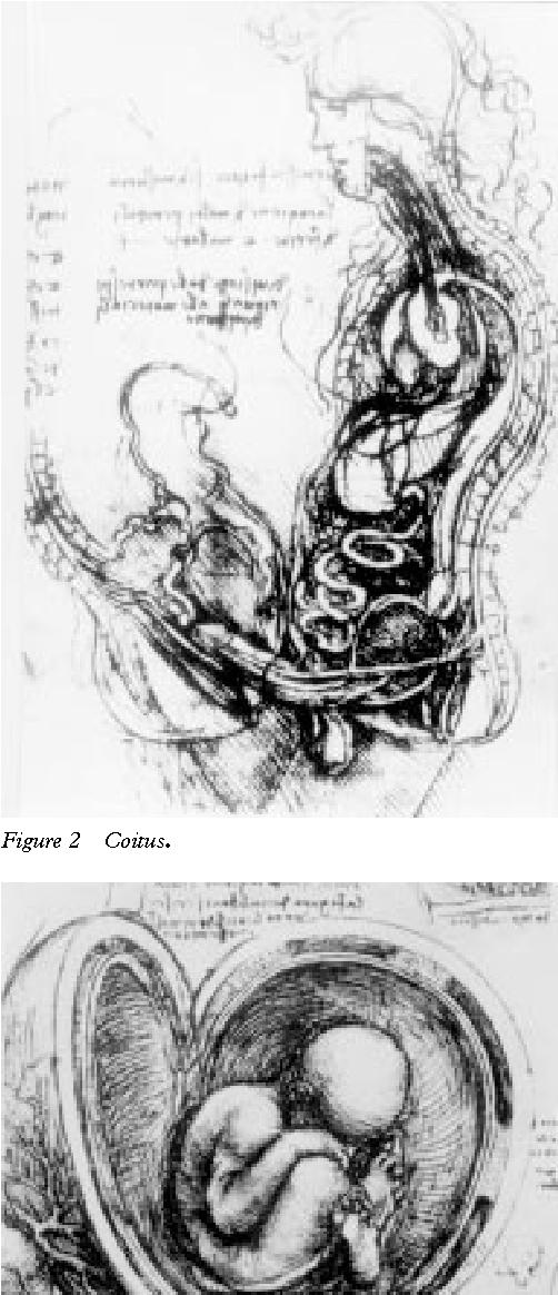 Figure 2 From Leonardo Da Vinci 1452 1519 And Reproductive Anatomy