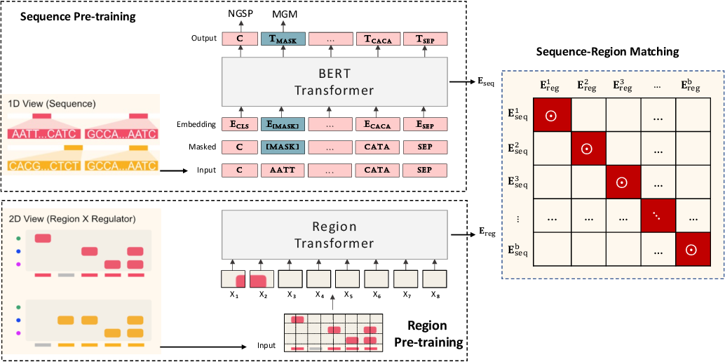 Figure 1 for Multi-modal Self-supervised Pre-training for Regulatory Genome Across Cell Types