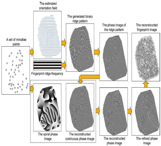 Fig. 4. Reconstructing a real-look alike fingerprint image from a set of minutiae points