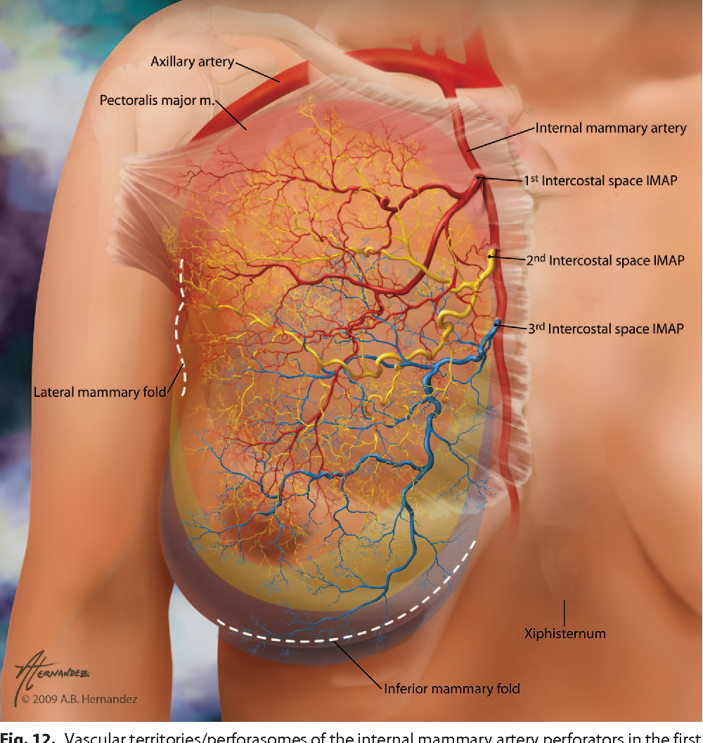 Three- and four-dimensional arterial and venous perforasomes of the ...