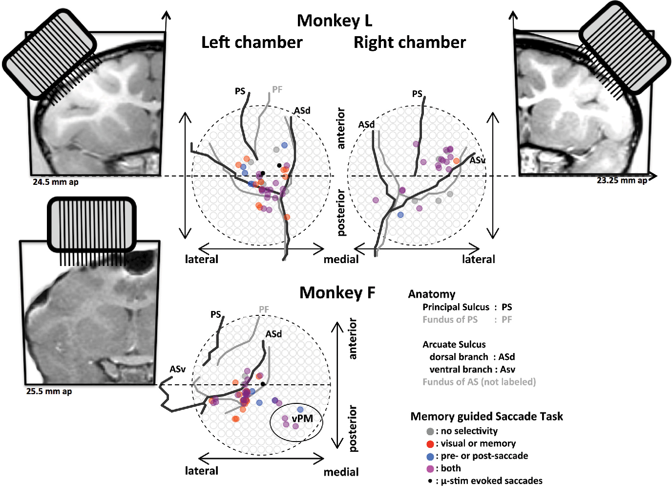 Figure 2 from performance monitoring in monkey frontal eye field figure 2 ccuart Choice Image