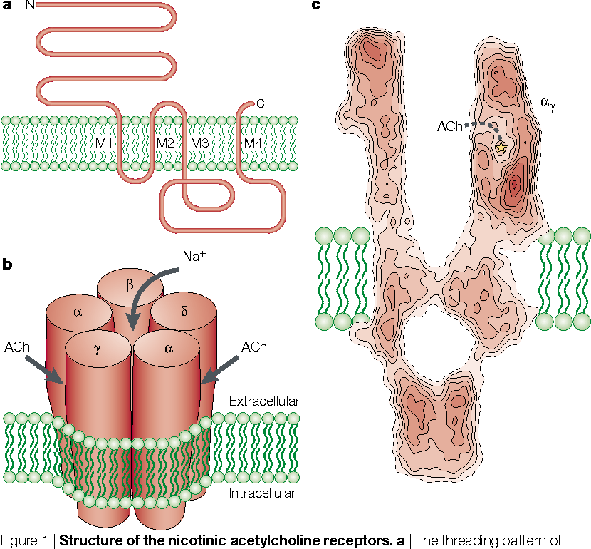 Figure 1 From Ion Channel Structure: Emerging Structure Of