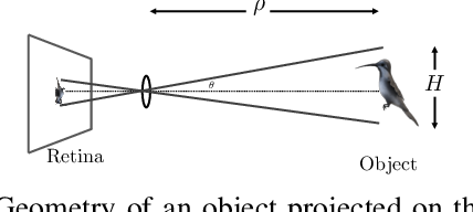 Figure 1 for Biologically Inspired Collision Avoidance Without Distance Information