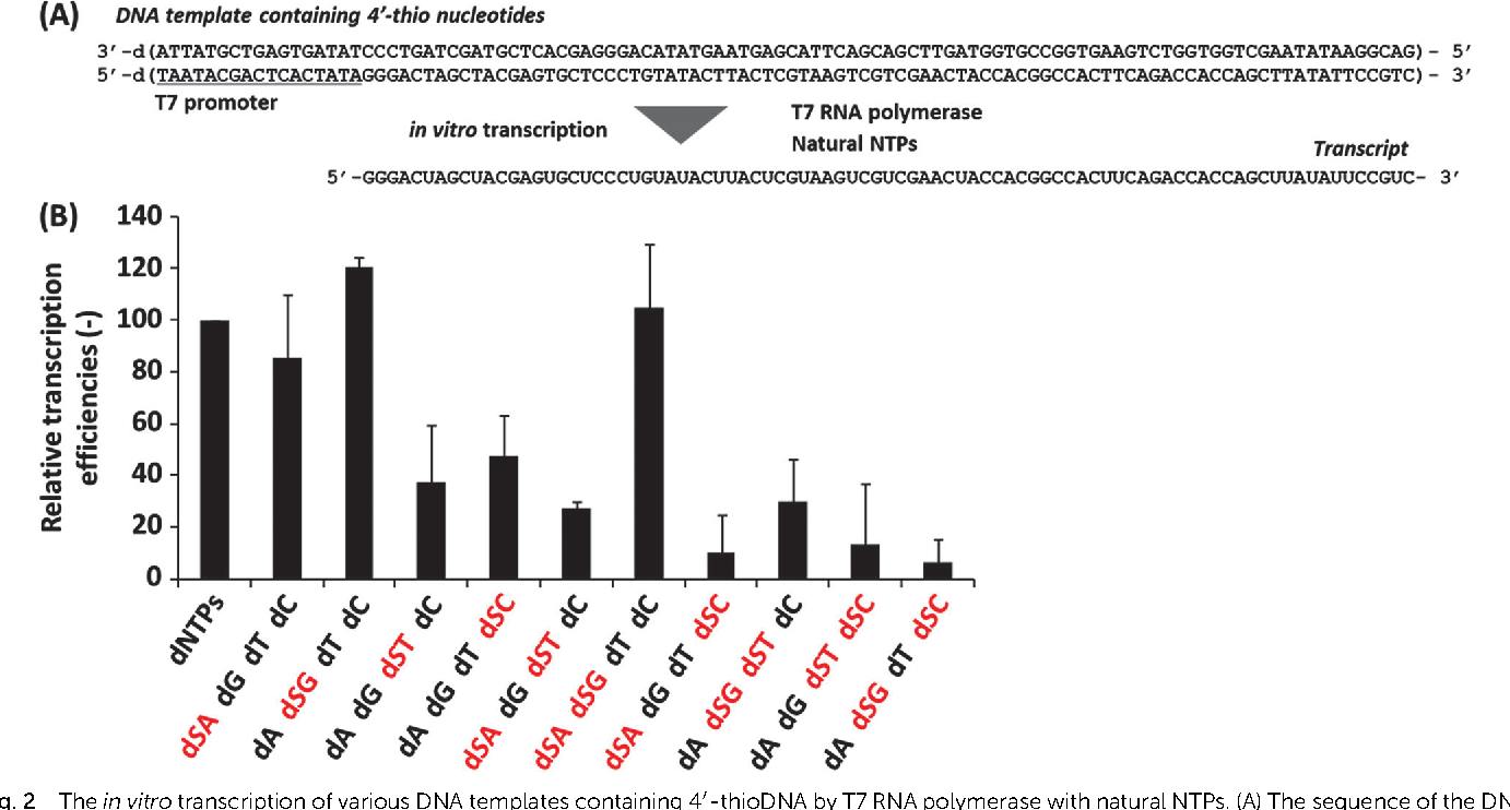 Figure 2 from Transcription of 4\'-thioDNA templates to natural RNA ...