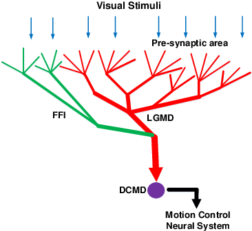 Figure 1 for A Visual Neural Network for Robust Collision Perception in Vehicle Driving Scenarios