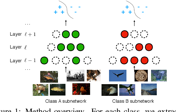 Figure 1 for Interpretable Disentanglement of Neural Networks by Extracting Class-Specific Subnetwork
