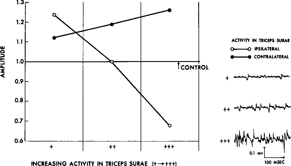 Figure 1 from Methods of tendon jerk reinforcement  The role