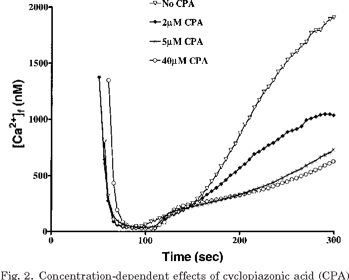 Fig. 2. Concentration-dependent effects of cyclopiazonic acid (CPA) in muscle homogenates on Ca2 release kinetics during a typical assay in phase 1 and phase 2.