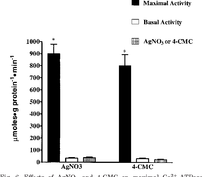 Fig. 6. Effects of AgNO3 and 4-CMC on maximal Ca2 -ATPase activity. Values are means SE (n 9). *Significantly different (P 0.05) from basal activity and net AgNO3 and 4-CMC activity.